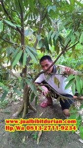 HpWa 0813-2711-9234, Bibit Durian Kaki 3 Jember H. Tovix (5)