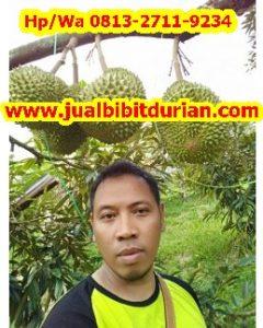 HpWa 0813-2711-9234, Bibit Durian Musang King Gresik H. Tovix (7)