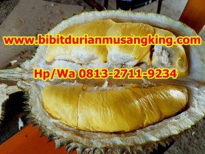 HpWa 0813-2711-9234, Bibit Durian Musang King Gresik H. Tovix (8)