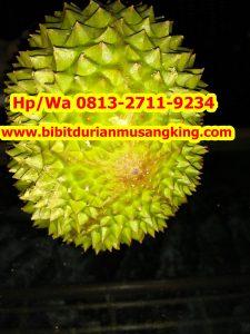 HpWa 0813-2711-9234, Bibit Durian Unggul Banyuwangi H. Tovix (10)