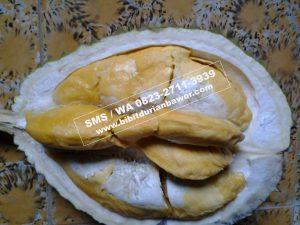 HpWa 0813-2711-9234, Bibit Durian Unggul Banyuwangi H. Tovix (6)