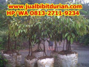 HpWa 0813-2711-9234, Jual Bibit Durian Bawor Bantul H. Tovix (4)