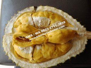 HpWa 0813-2711-9234, Jual Bibit Durian Bawor Kebumen H. Tovix (6)