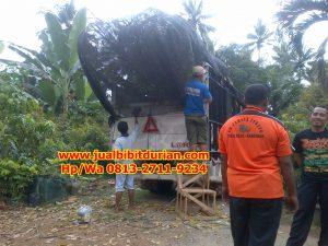 HpWa 0813-2711-9234, Jual Bibit Durian Dongkelan Kulon Progo H. Tovix.JPG (2)