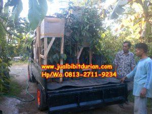 HpWa 0813-2711-9234, Jual Bibit Durian Dongkelan Kulon Progo H. Tovix.JPG