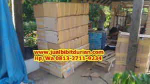 HpWa 0813-2711-9234, Jual Bibit Durian Musang King Lampung H. Tovix (2)