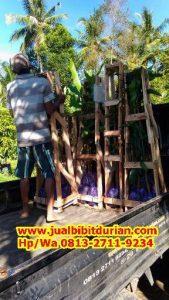 HpWa 0813-2711-9234, Jual Bibit Durian Musang King Lampung H. Tovix (3)
