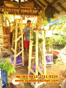 HpWa 0813-2711-9234, Jual Bibit Durian Musang King Lampung H. Tovix