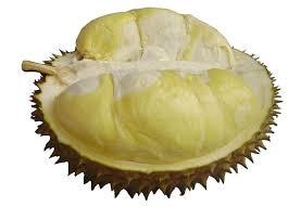 HpWa 0813-2711-9234, Jual Bibit Durian Yogyakarta H. Tovix