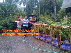 HpWa 0813-2711-9234. Jual Bibit Durian Musang King Magelang H. Tovix