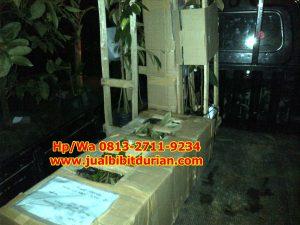 HpWa 0813-2711-9234. Jual Bibit Durian Musang King Magelang H. Tovix (2)