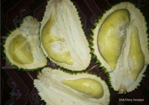 Durian Namlung dok.pribadi Devy Sanjaya