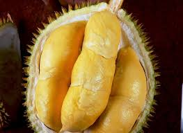 durian bokor 1