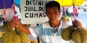 durian cumasi 1