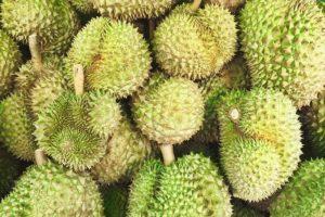 durian vulkanik