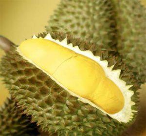 durian montong 1