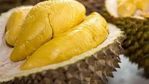 durian montong 2