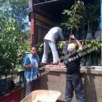Bibit Durian Bawor Medan, Bp.H Ismail 0813 2711 9234