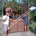 Bibit Durian Bawor Surabaya, Bp.H Ismail