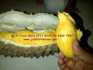 Durian Bawor Kemranjen, Bp.H.Tovix 0813 2711 9234, www.jualbibitdurian.com