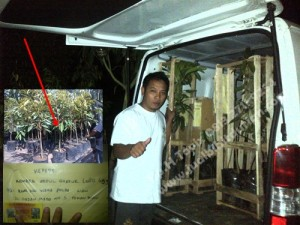 bibit musang king, bibit durian musang king murah, Bp.H Tovix 0813 2711 9234