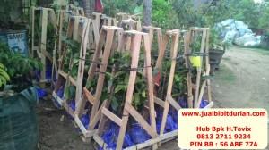 bukti pengiriman, www.jualbibitdurian.com, durian musangking asli, durian montong
