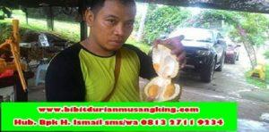 bibit-durian-musang-king-kaki-3-bibit-durian-musang-king-kediri-benih-durian-musang-king-kedah-bibit-durian-musang-king