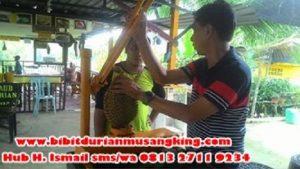 penjual-bibit-durian-musang-king-bibit-pohon-durian-musang-king-bibit-durian-musang-king-sabah-benih-durian-musang-king-sabah