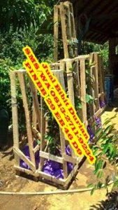 Bibit Durian Siap Buah
