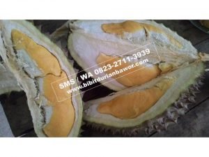 Buah Durian Bawor