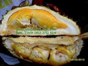 buah durian bawor,Bpk Tovik 0813 2711 9234,www.jualbibitdurian.com