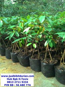 jualbibitdurian, durian bawor