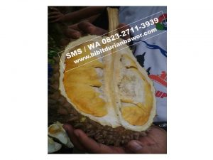 Wa 0813-2711-9234, Durian Bawor Kemranjen, Daftar Harga Bibit Durian Bawor
