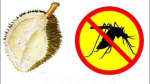kulit-durian_20180122_205615