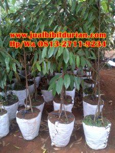 HpWa 0813-2711-9234, Durian Bawor Pak Sarno, Bibit Durian Bawor Aceh.jpg (2)