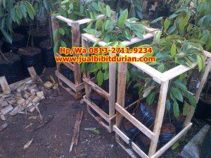 HpWa HpWa 0813-2711-9234, Jual Bibit Durian Jogja H. Tovix.JPG (3)