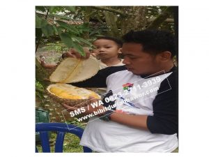 HpWa 0813-2711-9234, Jual Bibit Durian Medan H. Tovix (4)