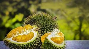 durian 0