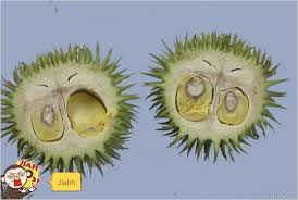 durian terutung