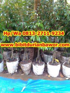 HpWa 0813-2711-9234, Bibit Durian Banyumas H (2)
