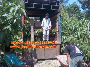 HpWa 0813-2711-9234, Bibit Durian Banyumas H (3)