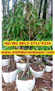 HpWa 0813-2711-9234, Bibit Durian Banyumas H (4)