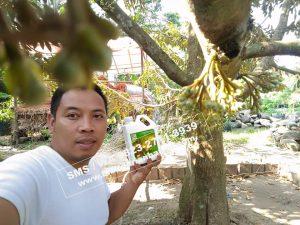 HpWa 0813-2711-9234, Bibit Durian Kaki 3 Jember H. Tovix (2)