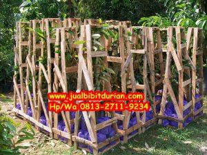 HpWa 0813-2711-9234, Jual Bibit Durian Bawor Kebumen H. Tovix
