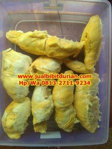 HpWa 0813-2711-9234, Jual Bibit Durian Bawor Kebumen H. Tovix (8)