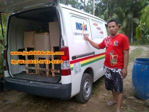 HpWa 0813-2711-9234, Jual Bibit Durian Musang King Lampung H. Tovix (4)