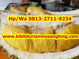 HpWa 0813-2711-9234, Jual Bibit Durian Musang King Lampung H. Tovix (8)