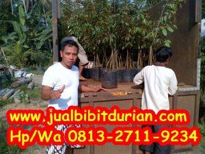 HpWa 0813-2711-9234, Jual Bibit Durian Semarang H. Tovix (2)
