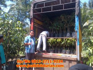 HpWa 0813-2711-9234, Jual Bibit Durian Solo H. Tovix (3)