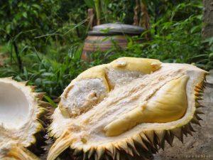 durian nonothaburi